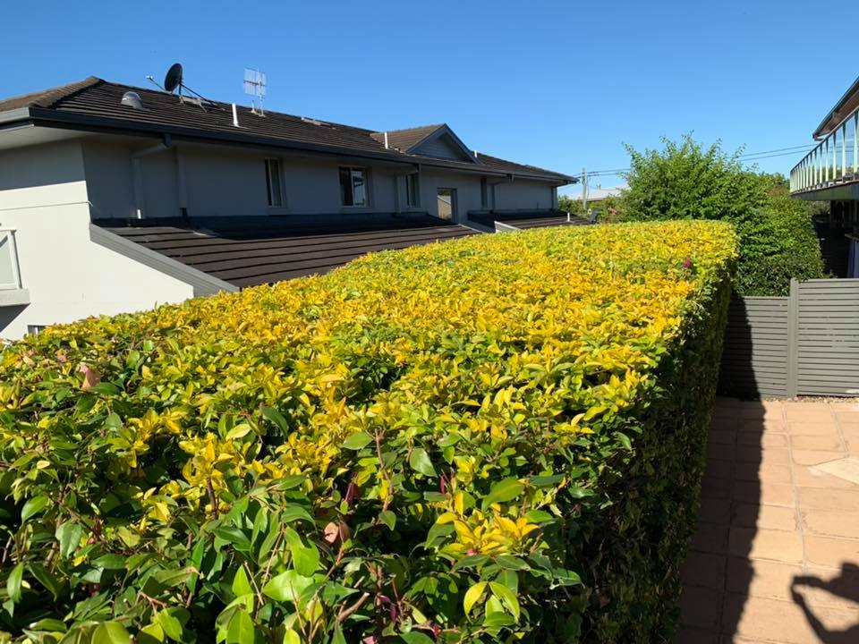 terrigal-hedge-trimming