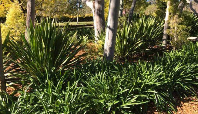 gardenmaintenance-centralcoast